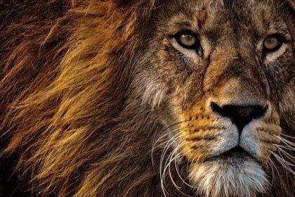 Die Höhle der Löwen auf Vox